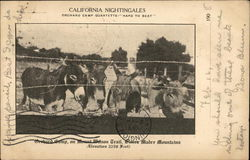 California Nightengales, Orchard Camp