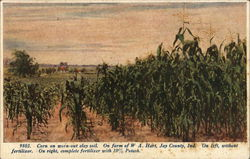Corn on Worn-Out Clay Soil