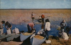 Indian Wild Rice Harvesters Near Mille Lacs Lake