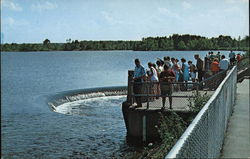 Pymatuning Lake - Visitors at Spillway Feeding Fish