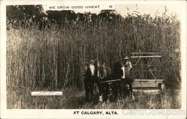 We Grow Good Wheat Calgary Canada Alberta