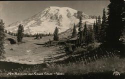 Mount Rainer and Flower Fields