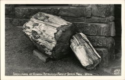 Specimans at Ginkgo Petrified Forest State Park Postcard