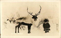 Alaska Reindeer and Eskimo Child Postcard