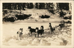 Sled Dogs in Snow
