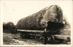 Washington Douglas Fir Log