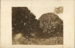 Hard Maple Trees at Elgin Broad on the Johnson Acres Postcard