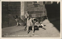 Hospice du Grand-Saint-Bernard - The Dogs