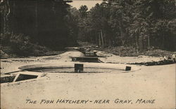 The Fish Hatchery