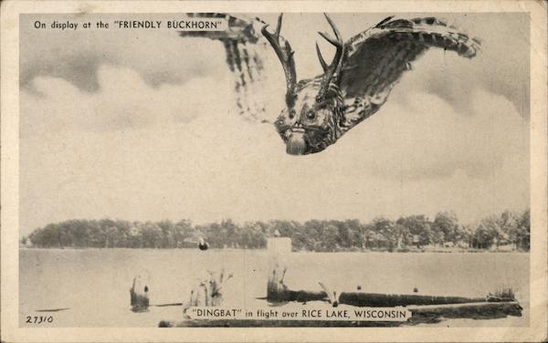 Dingbat In Flight Rice Lake Wisconsin Exaggeration