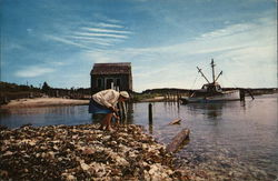 Gathering Shells By the Old Oyster House at Wellfleet on Cape Cod