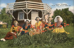Tulip Time Postcard