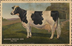 Holstein-Friesian Co