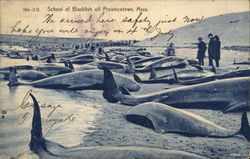 School of Blackfish