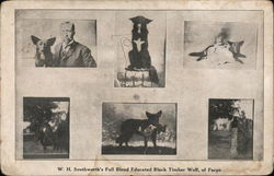 W. H. Southworth's Full Blood Educated Black Timber Wolf