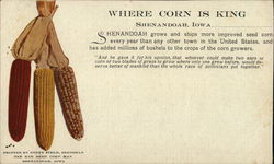 Where Corn Is King