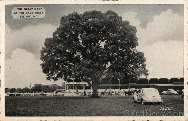 The Great Oak at the Race-Track Bel Air Maryland