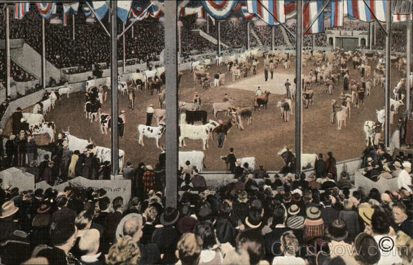 Parade of Champion Cattle in Hippodrome, Dairy Cattle Congress Waterloo Iowa