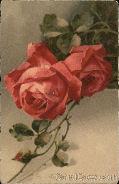 Red Rose C. Klein Flowers