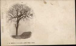 The Lone Tree Postcard