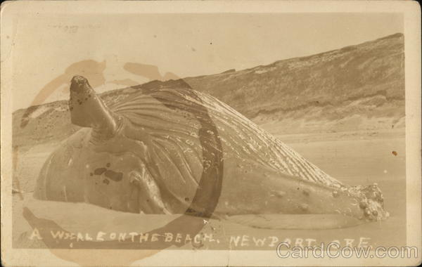 A Whale on the Beach Newport Oregon