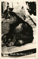Monkey in Straw Hat