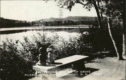 Reflections at Edge of Grove, Pilgrim Pines Postcard