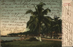Shoreline and Palm Trees