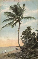 Climbing Tree for Coconuts