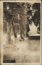 Tree-lined Street with Man Seated on Bench