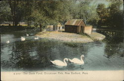 The Duck Pond, Brooklawn Park