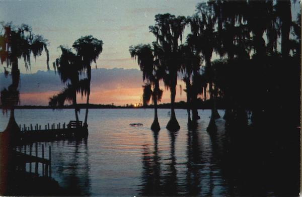 The Fascinating Silhouettes Of Cypress Tree Cypress Gardens Florida