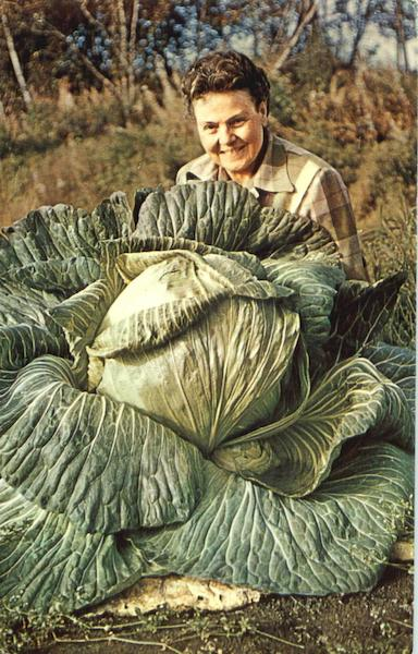 44 Lb Alaska Cabbage Vegetables