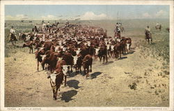 A Cattle Drive