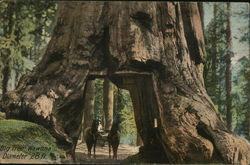 Big Tree Wawona
