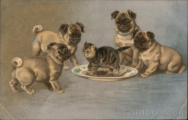 Pug Puppies Playing with Kitten Dogs