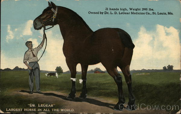 Dr LeGear Largest Horse in the world Horses