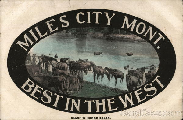 Miles City, Mont. Best in the West Montana Horses
