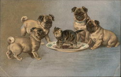 Pug Puppies Playing with Kitten