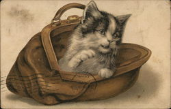 Kitten in a Purse