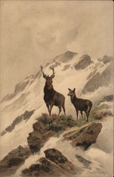 Deer on Mountaintop