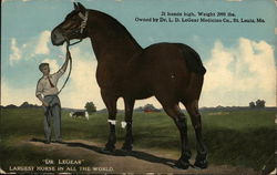 Dr LeGear Largest Horse in the world