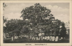 View of Oak Tree