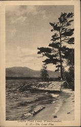 Geneva Point Camp - The Lone Pine Postcard