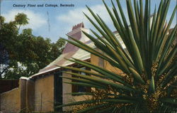 Century Plant and Cottage, Bermuda