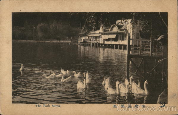 Swans Swimming, The Park Suma Japan