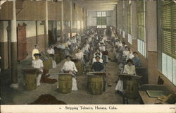 Women Stripping Tobacco