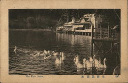 Swans Swimming, The Park