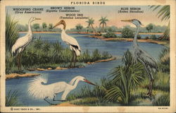 View of Florida Birds