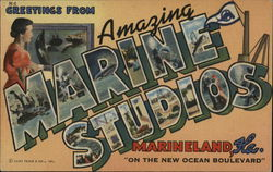 Greetings From Amazing Marine Studios Postcard